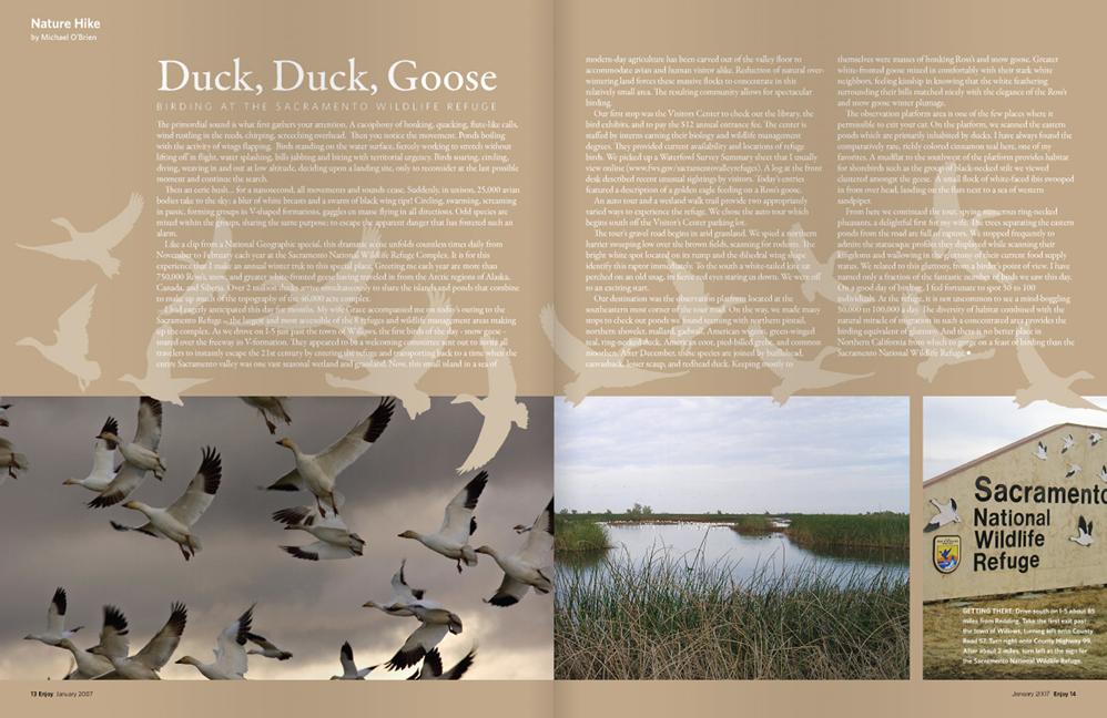 duckduckgoose-1